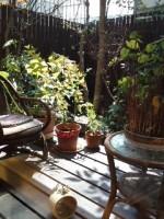 おうちカフェ樹林の庭